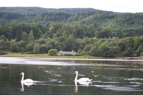 Upfront,up,front,reviews,accommodation,self,catering,rental,holiday,homes,cottages,feedback,information,genuine,trust,worthy,trustworthy,supercontrol,system,guests,customers,verified,exclusive,castle cottage 1,ardtornish estate,morvern,,image,of,photo,picture,view