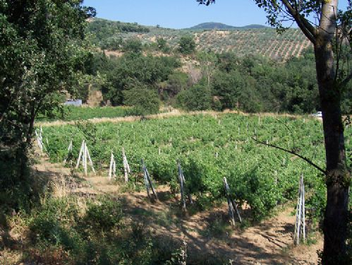 One of the vineyards surrounding the villa