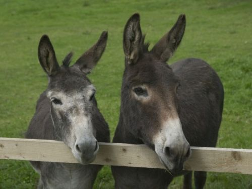 Upfront,up,front,reviews,accommodation,self,catering,rental,holiday,homes,cottages,feedback,information,genuine,trust,worthy,trustworthy,supercontrol,system,guests,customers,verified,exclusive,donkey mill,tregongeeves farm,st austell,,image,of,photo,picture,view