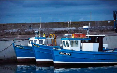 Seahouses boat trips
