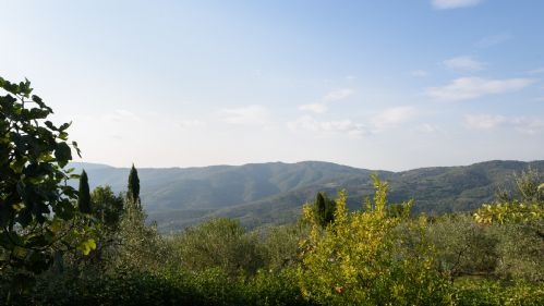 Upfront,up,front,reviews,accommodation,self,catering,rental,holiday,homes,cottages,feedback,information,genuine,trust,worthy,trustworthy,supercontrol,system,guests,customers,verified,exclusive,cottage - il sole  ,tuscan charm,castiglion fiorentino,,image,of,photo,picture,view