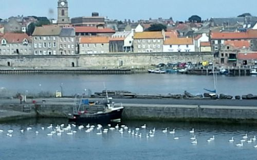 Upfront,up,front,reviews,accommodation,self,catering,rental,holiday,homes,cottages,feedback,information,genuine,trust,worthy,trustworthy,supercontrol,system,guests,customers,verified,exclusive,tweed cottage, paxton,border holiday homes,berwickshire,,image,of,photo,picture,view