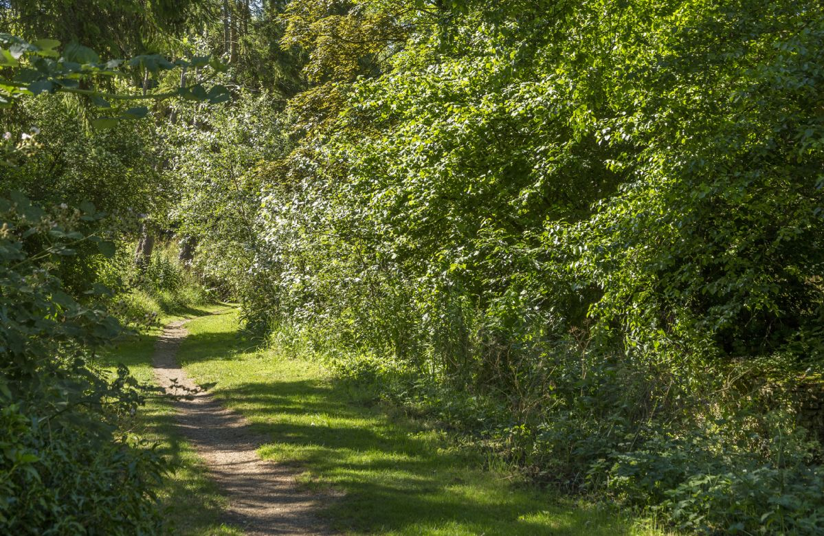 Take a long country walk along one of the many trails that surround Catalpa Cottage