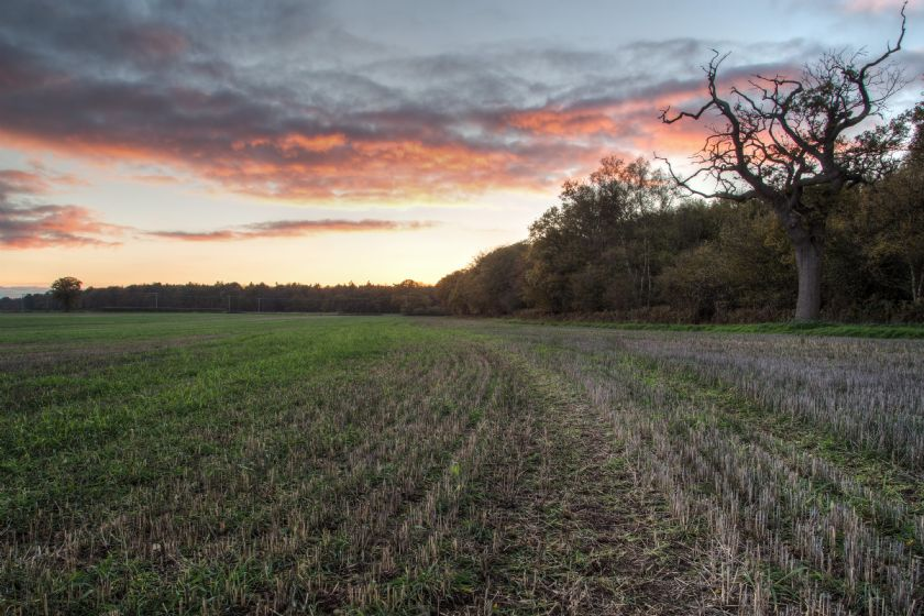 Dawn over an open field