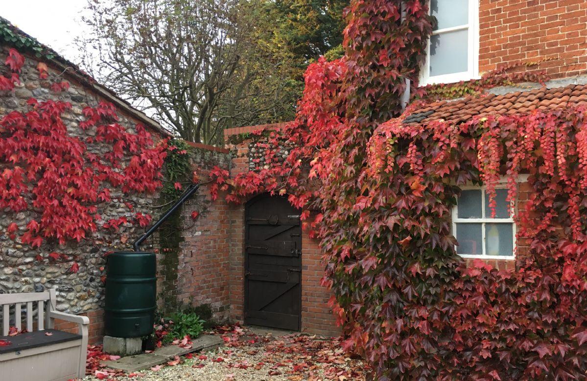 Rear Garden with the Autumn Virginia Creeper