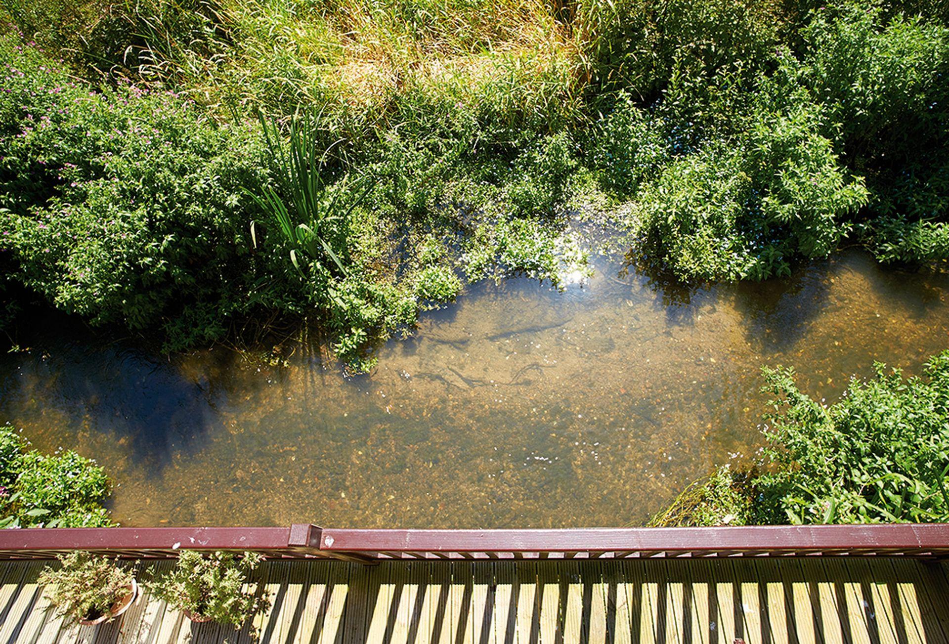 Overlooking the stream
