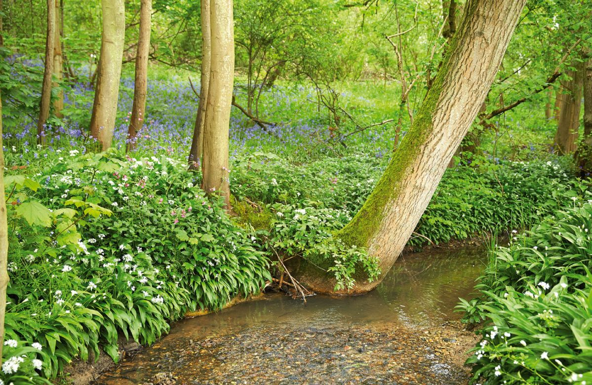 Enjoy woodland walks right on the doorstep
