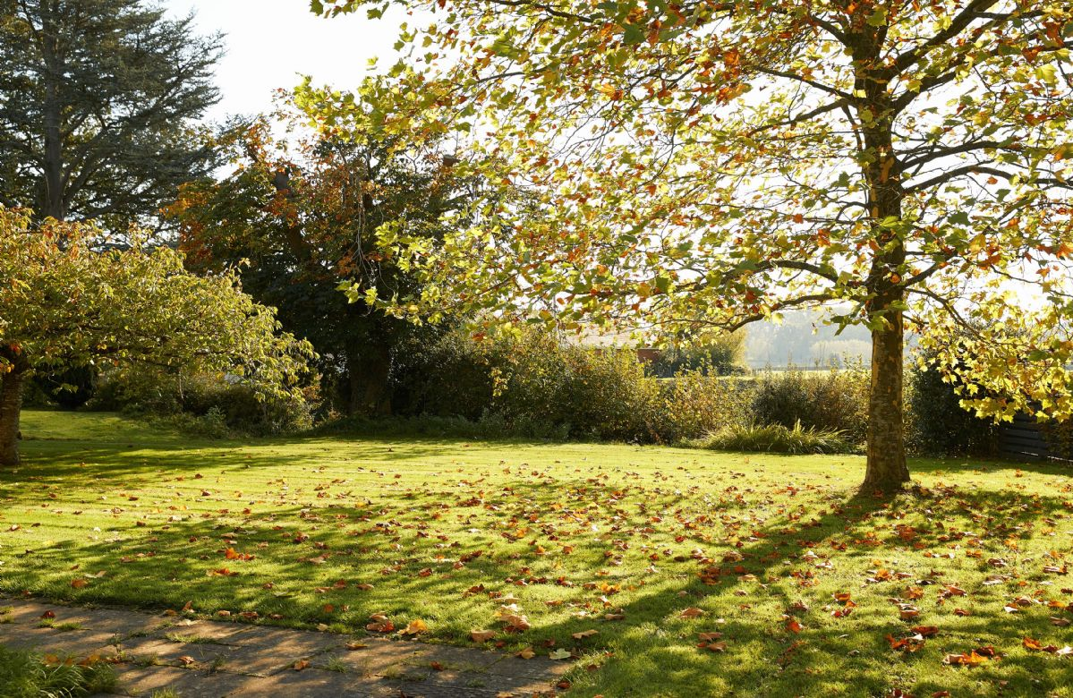 Beautiful trees adorn the lawn with countryside views