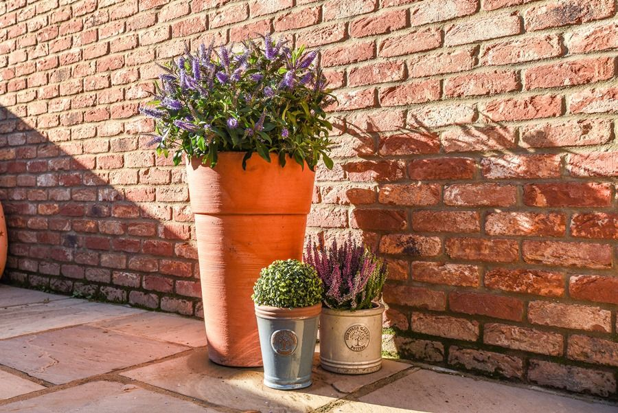 Star Cottage | Garden pots