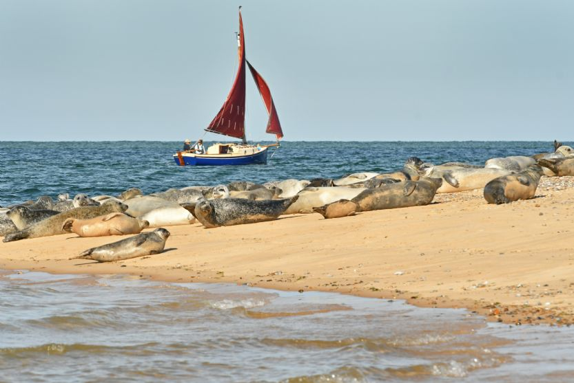 Local Area: Seals at Blakeney Point