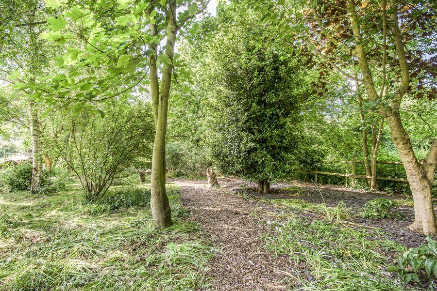 Sybil Cottage | Woodland garden
