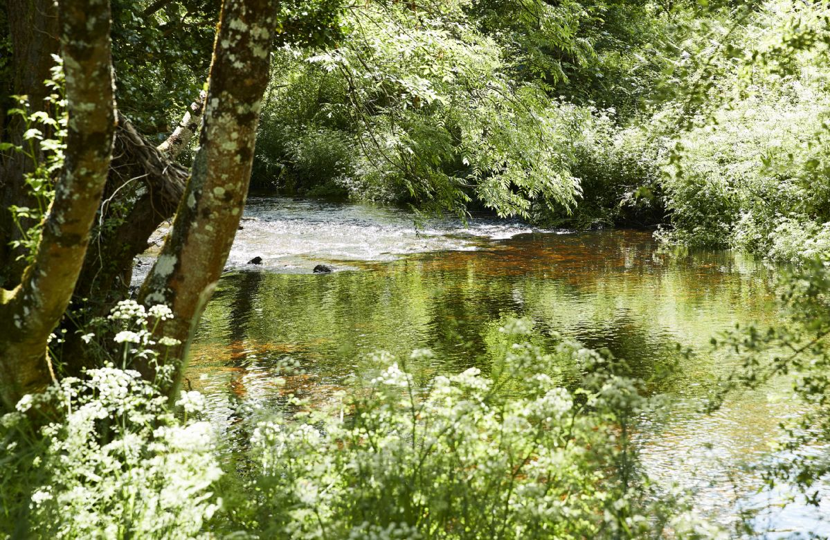 The river is home to salmon, trout and a family of otters and comes with half a mile of fishing bank