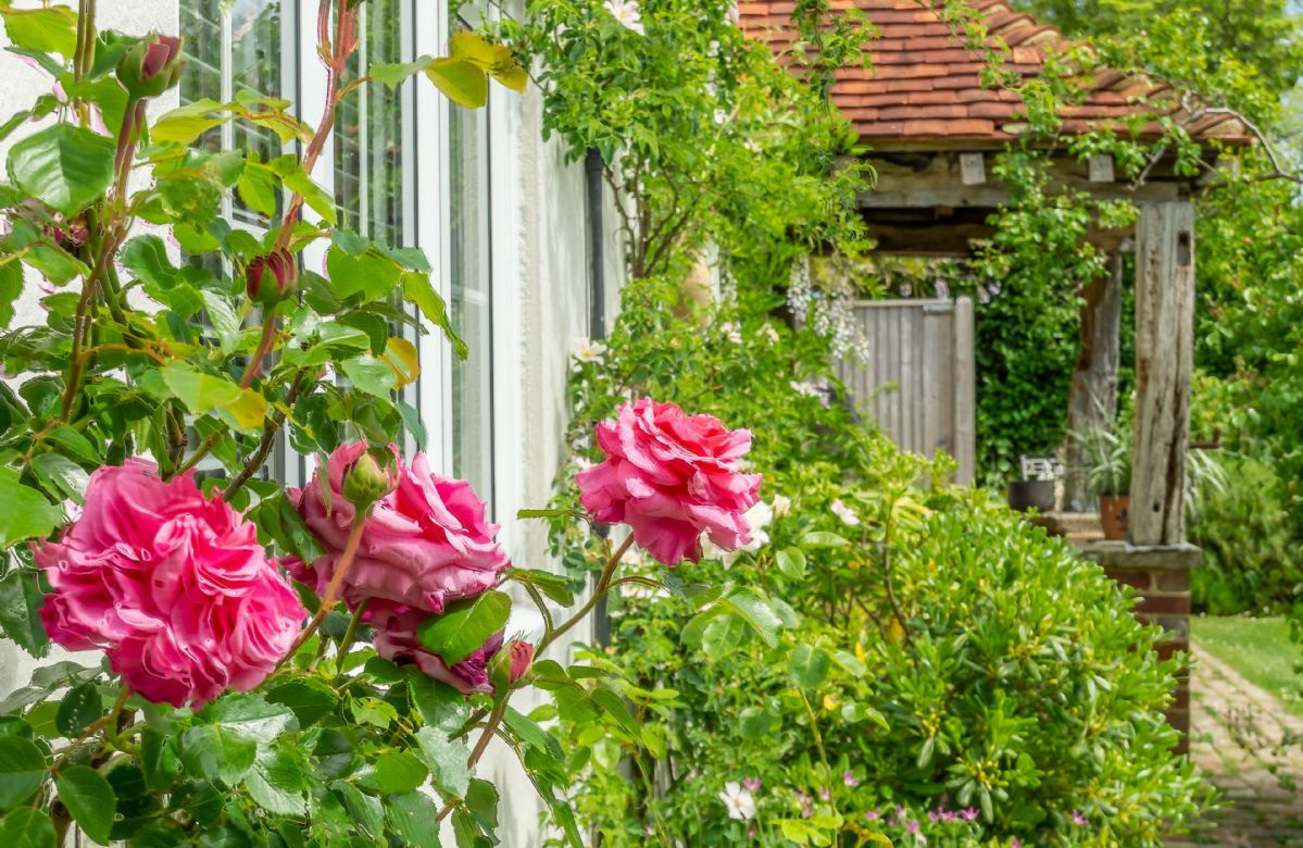 The stunning gardens at Cherry Cottage are truly beautiful