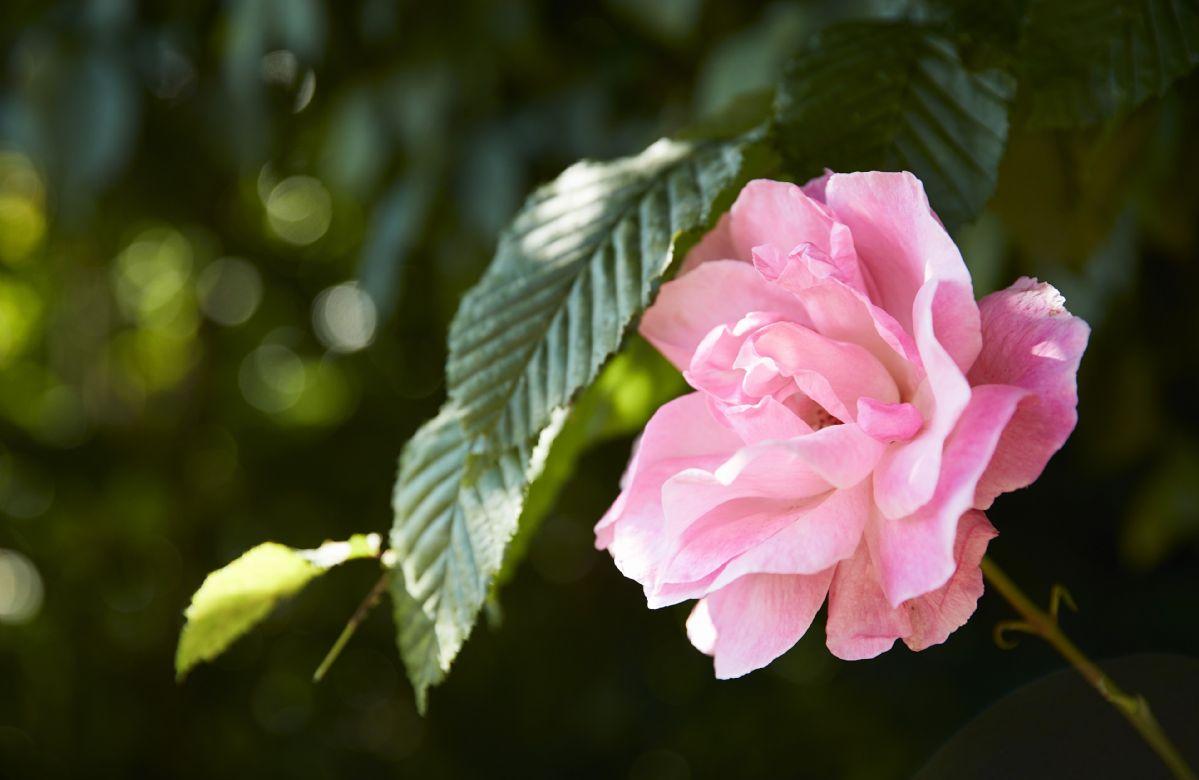 Summer flowers in full bloom