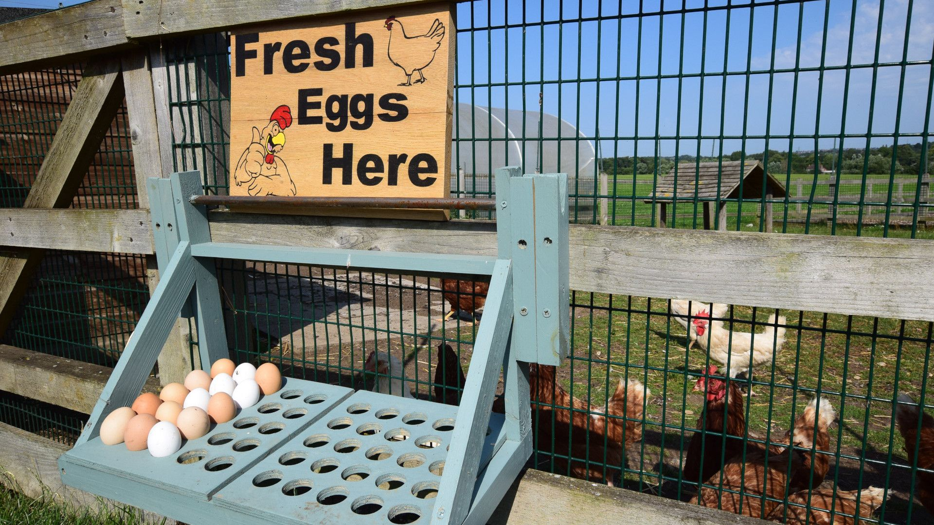 Collect free fresh eggs from the on-site hens! Shepherds Hut at Avon Farm, Bolthole Retreats
