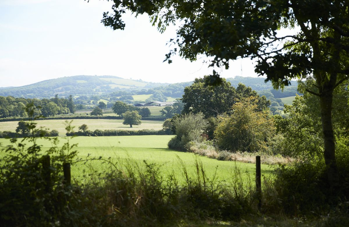 Take a stroll through the peaceful woods at Downclose Farm