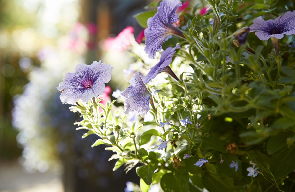 Beautiful seasonal flowers