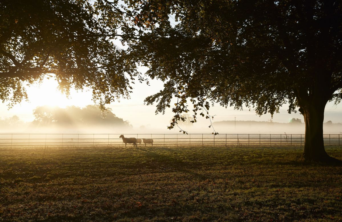 Early morning on the grounds of the estate