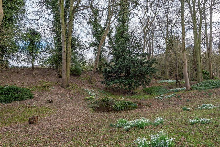 Bay Tree Cottage | Snowdrops at Walsingham