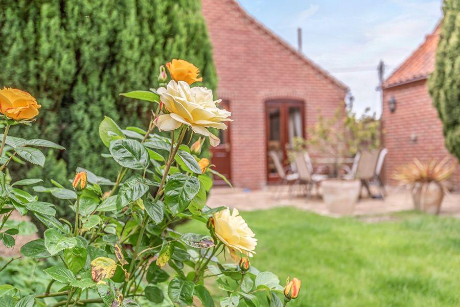 The New Cottage | Garden