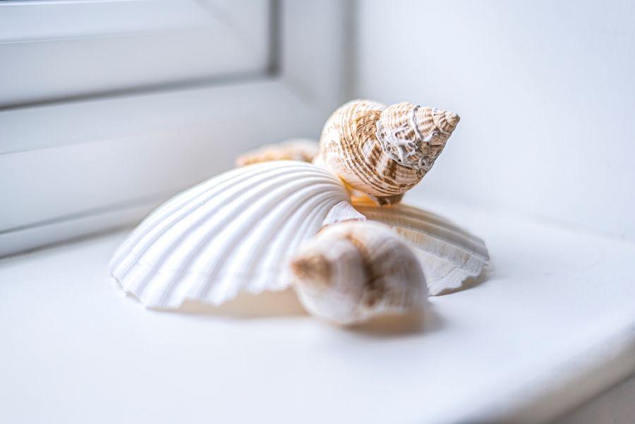 Rose Cottage Brancaster Staithe | Shells