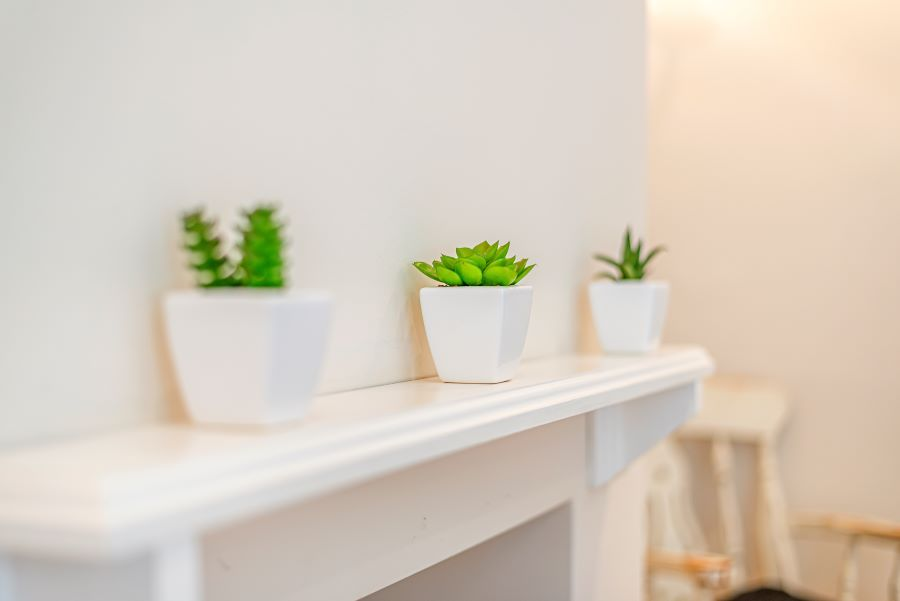 Duffields House | Cacti