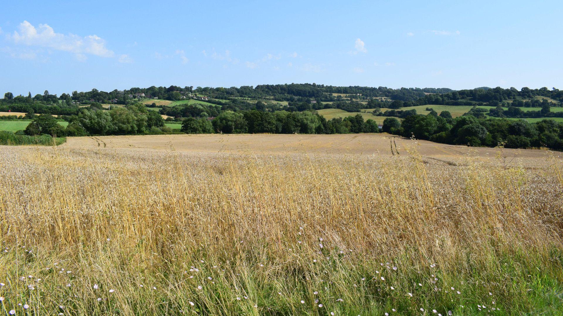 Farmland view, Shepherds Hut at Avon Farm, Bolthole Retreats