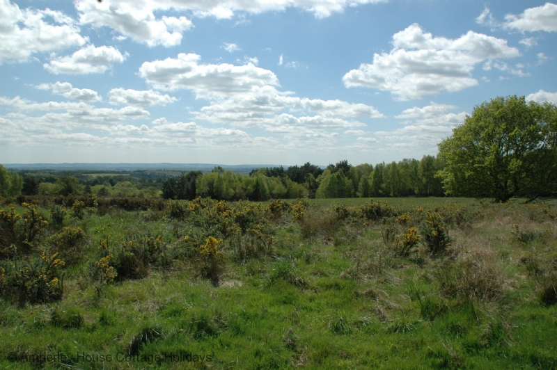 Large Image - Looking south east across the Ashdown Forest