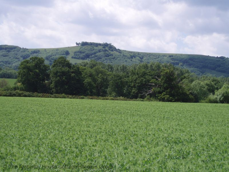 Large Image - View of Chanctonbury Ring from Buncton