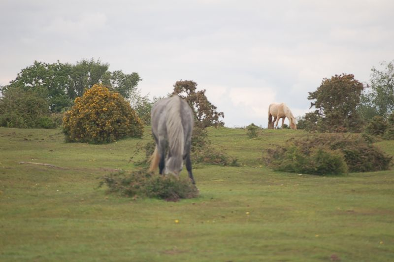 Neighbouring ponies