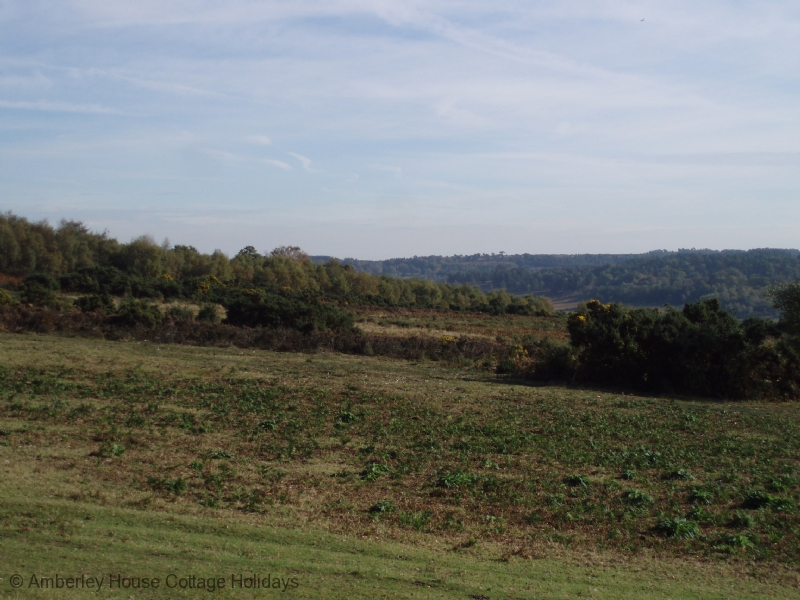 Large Image - The Ashdown Forest