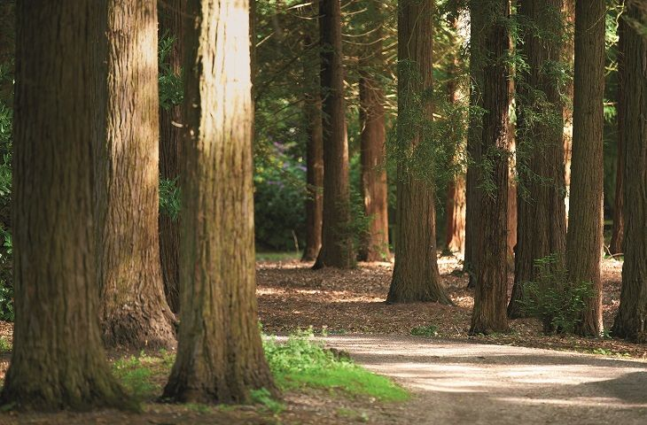 Enjoy a stroll through temple wood