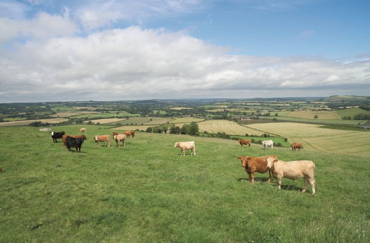 As the highest village in Dorset the views from the walks in the area are spectacular to the coast of the Isle of Wight