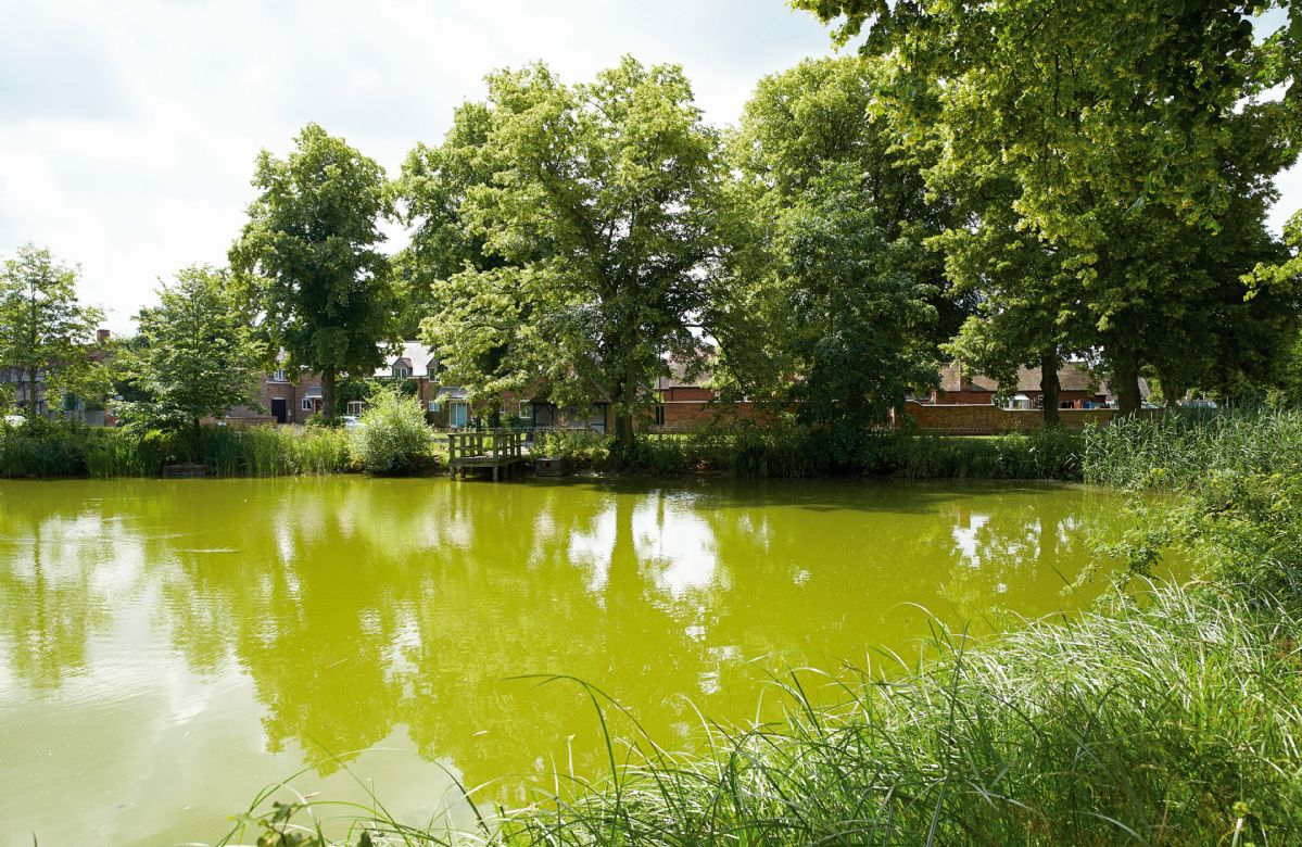 The pond in Long Itchington