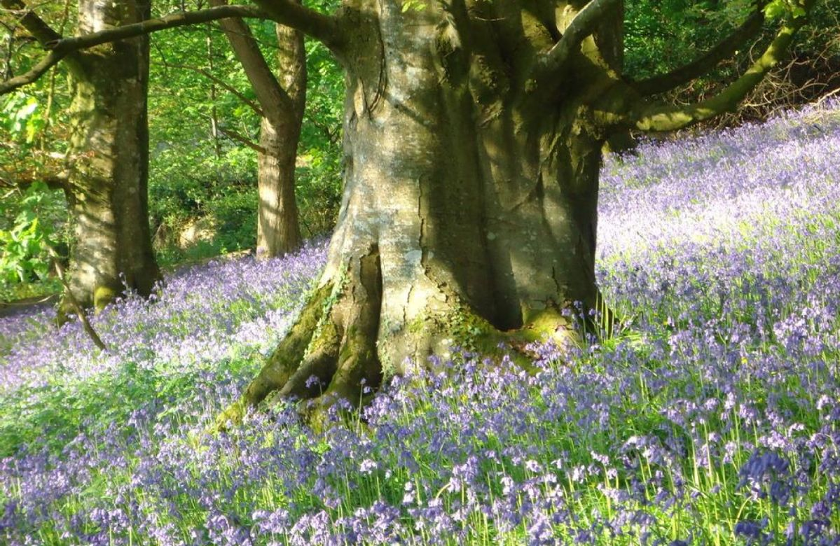 A bluebell wood is short walk away