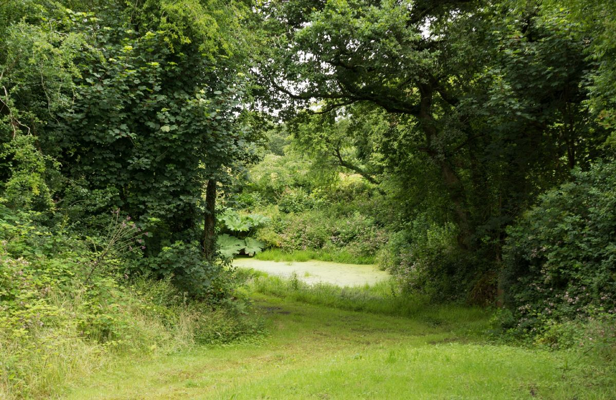Take a walk through the private woodland