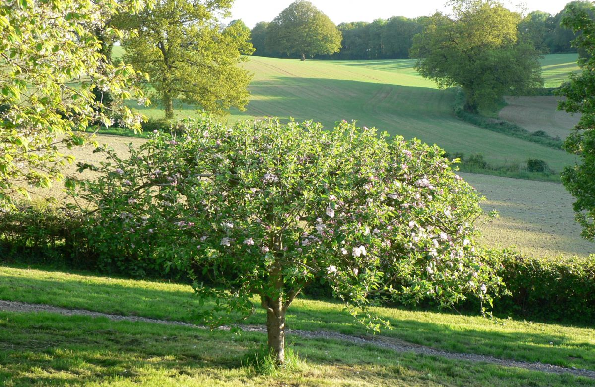 The large enclosed fenced and private garden with cherry trees is safe for dogs