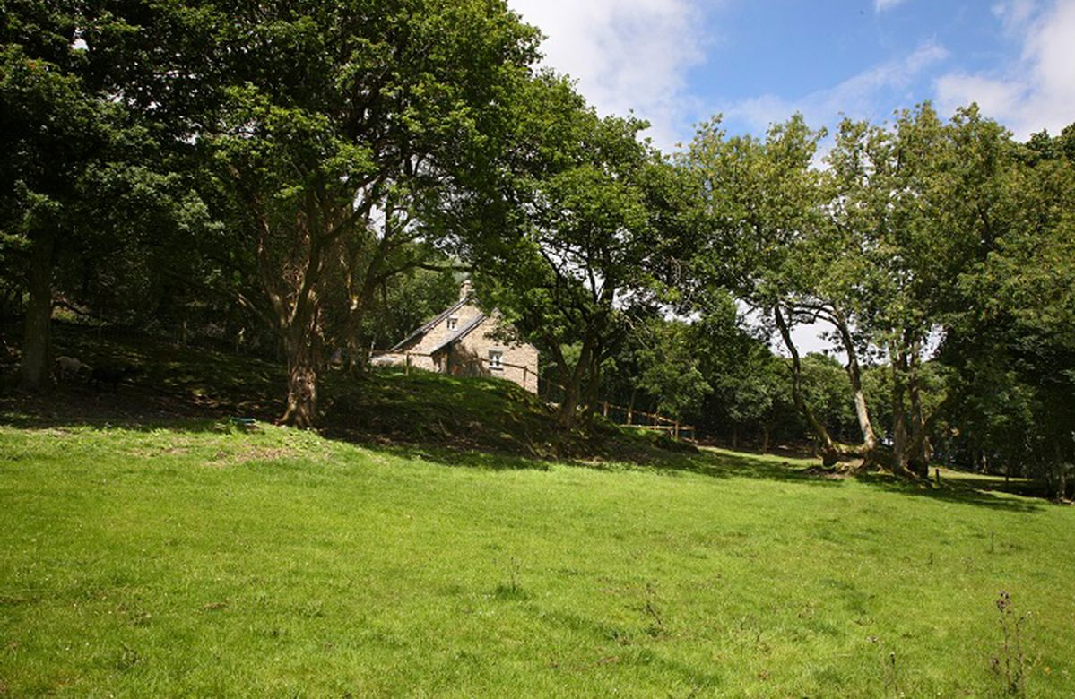 Tyddyn Derwen, nestled in woodland and overlooking a field