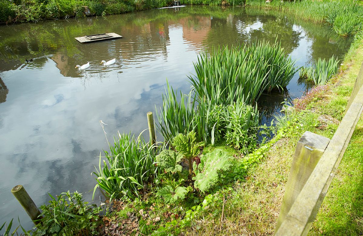 Small pond within the garden