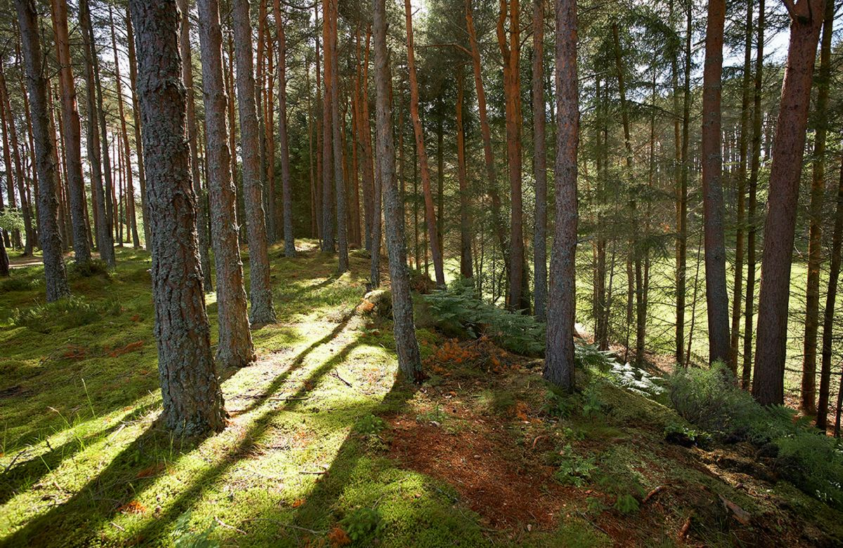 Green Neuk is set in two acres of woodland