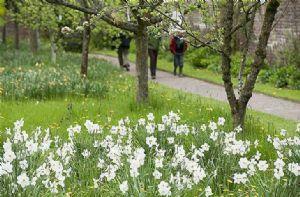 Acorn Bank Gardens, during the spring