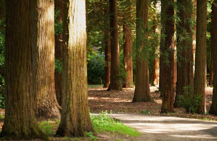 Guests staying at Knoll Tower can enjoy walking through Temple Wood, one of only five Capability Brown Pleasure Grounds left intact in the UK
