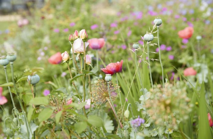 Enjoy the wonderful selection of plants and flowers in the garden.