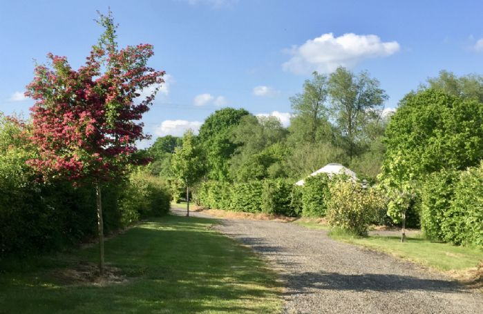 The driveway into each separate yurt surrounded by trees