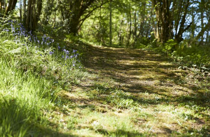 There are acres of woodland walks, streams and waterfalls waiting on the doorstep