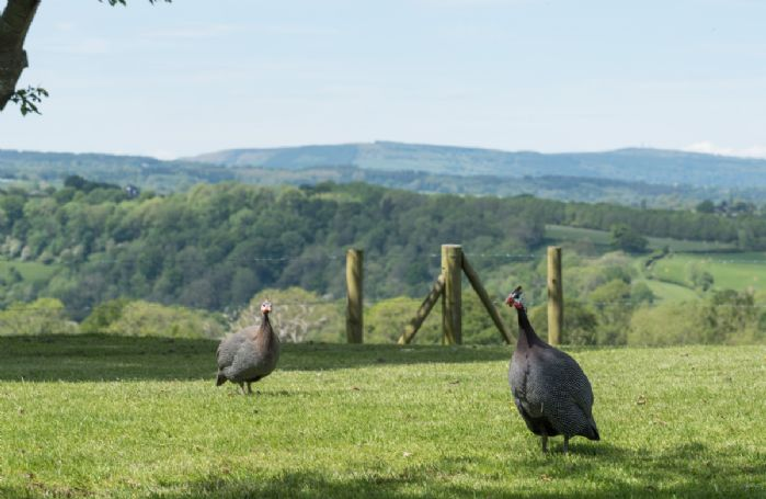 Stunning views and wildlife at Broad Meadows Farmhouse