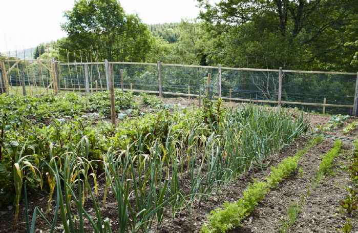 Guests are able to use the vegetable patch growing seasonal vegetables