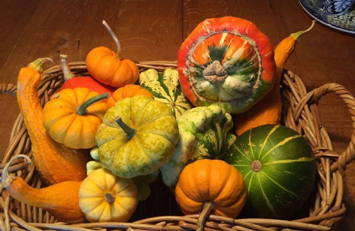 Pumpkins in Autumn to enjoy!