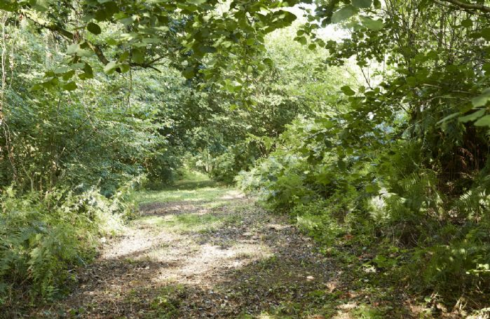 Enjoy one of the four beautiful walks in Downclose woods