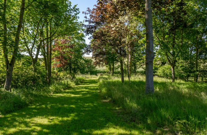 Beautiful woodland walks around the properties gardens